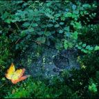 Nestajanje, Bukovicka banja, septembar 1999. godine