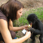 bonobo kultura 01