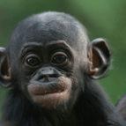 bonobo kultura 06