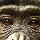 bonobos-bonobos-30-03-2011-7-g