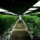 medical marijuana 8x5