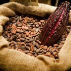 raw_cacao_beans