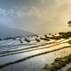 rice-field-3490060_1920