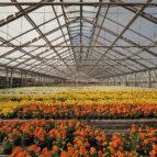 greenhouse-4948726_1280