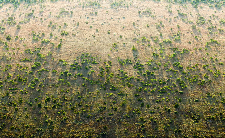 Veliki Zeleni zid u Africi